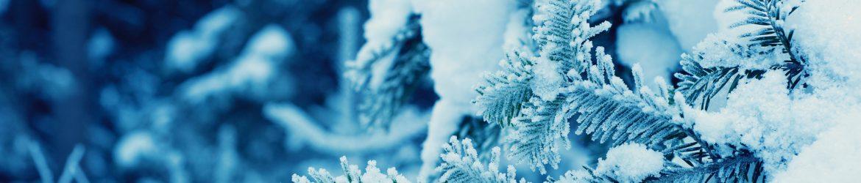 cropped-Winter-3.jpg